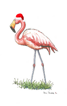 Flamingo With Hat