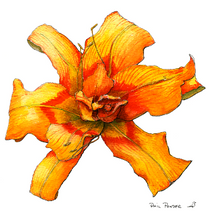 Flower Day Lily