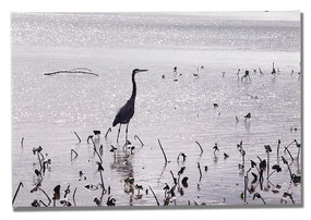 Low tide on the river with grey heron.