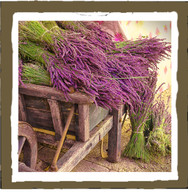 french lavender (4pk)