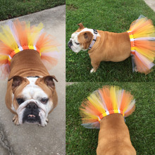 Bully Couture by Mini ~ Candy Corn Tutu