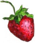 South Bay Strawberry ~ 16 oz