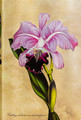 Brazilian Orchid Journal