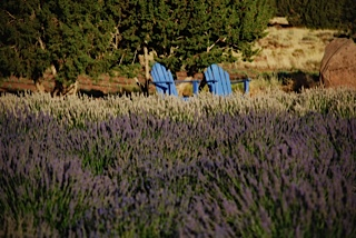 fields-4-chairs.jpg