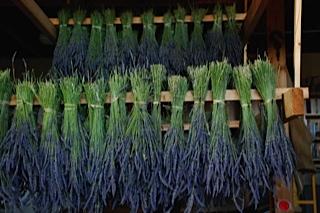 lavender-hanging2.jpg