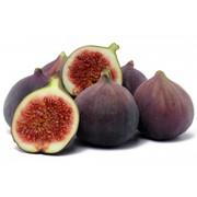 Fig-FA