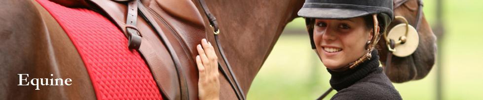 banner-horse.jpg