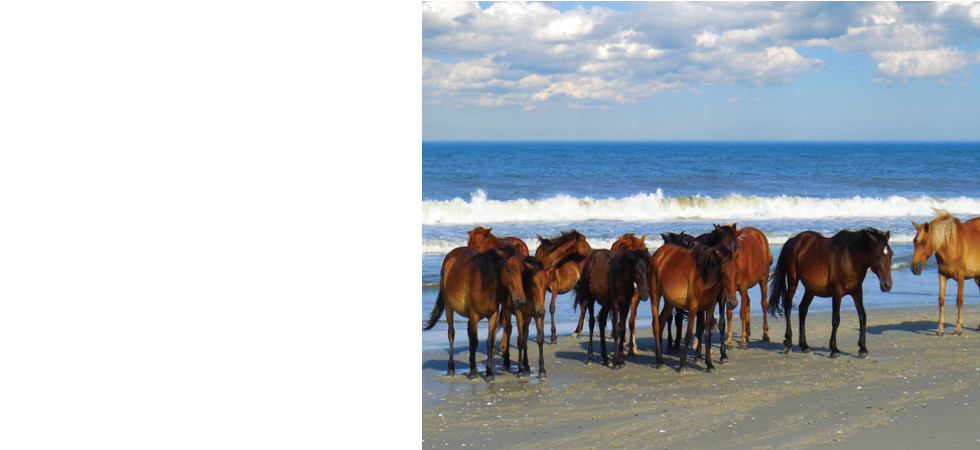 Beach party of horses