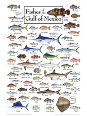 An identifying and educational chart of the Fishes of the Gulf of Mexico!