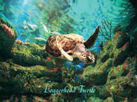 A beautiful picture of the Loggerhead Turtle!