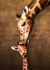 Giraffe Mother's Kiss 500-Piece Puzzle