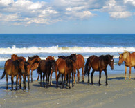 "Who doesn't love a party?  This 1000 piece beach puzzle features the wild horses found on the coast of southern Virginia and the Outer Banks of NC. This is a 1000 piece puzzle and is 30"" x 24"". These beautifully illustrated jigsaw puzzles are perfect for passing the time on a lazy afternoon. They also make great gifts for kids and adults alike!"