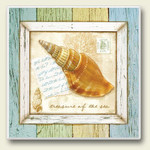 "Sea Shell Single Absorbent Coaster ""Triton Shell"" - 02-097"