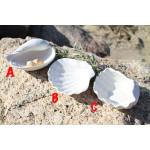 Porcelain Shell Decoration 25201A