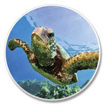 Sea Turtle Absorbent Stone Coaster for Car Cup Holder 03-093