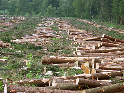 Deforestation hurts us all