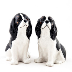 Cavalier King Charles Spaniel Salt and Pepper Tri