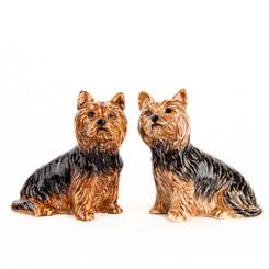 Yorkshire Terrier Salt and Pepper