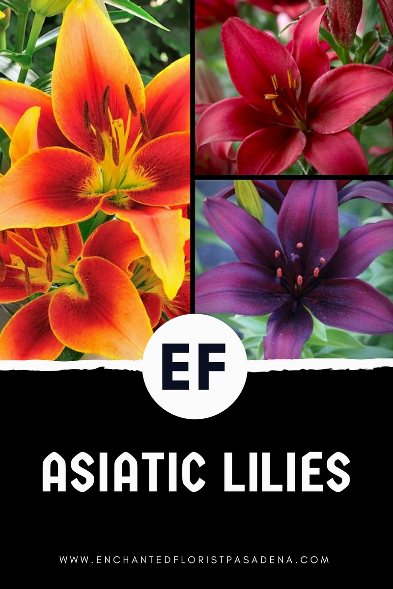 asiatic lilies from enchanted florist pasadena