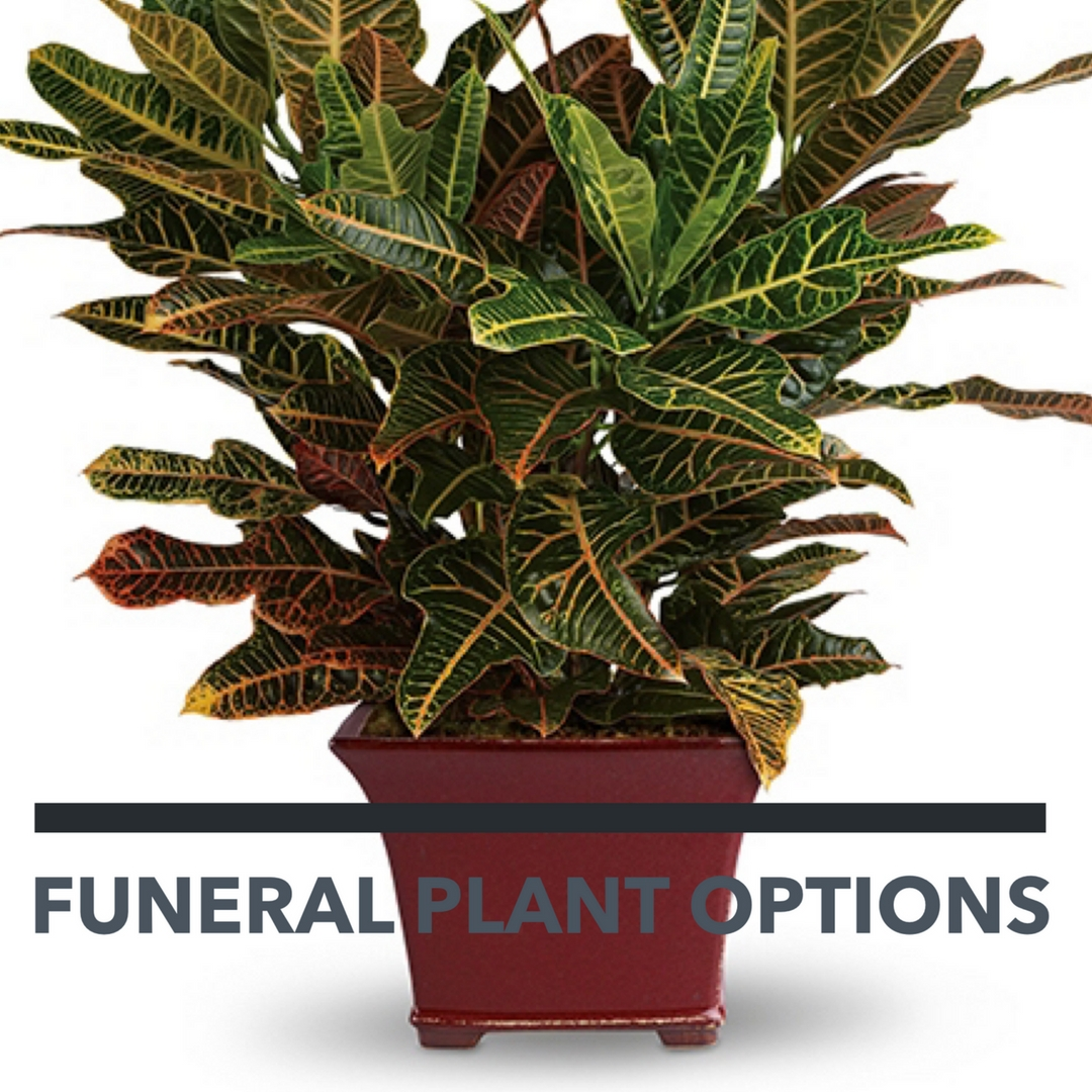 Funeral plants an important alternative to funeral flowers plants for funerals 1 dhlflorist Images