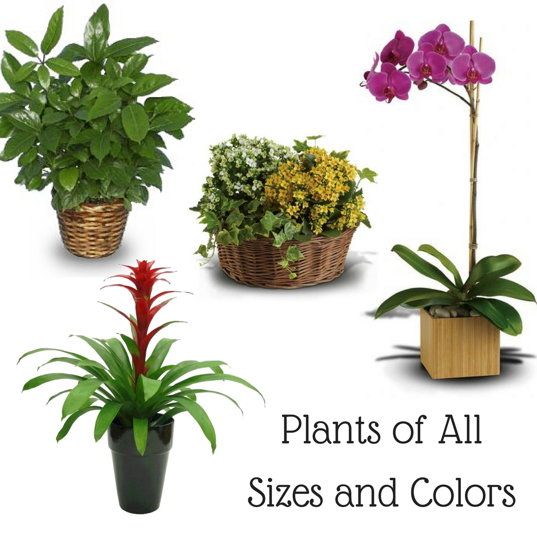Funeral plants an important alternative to funeral flowers plants for funerals pasadena 1 dhlflorist Gallery
