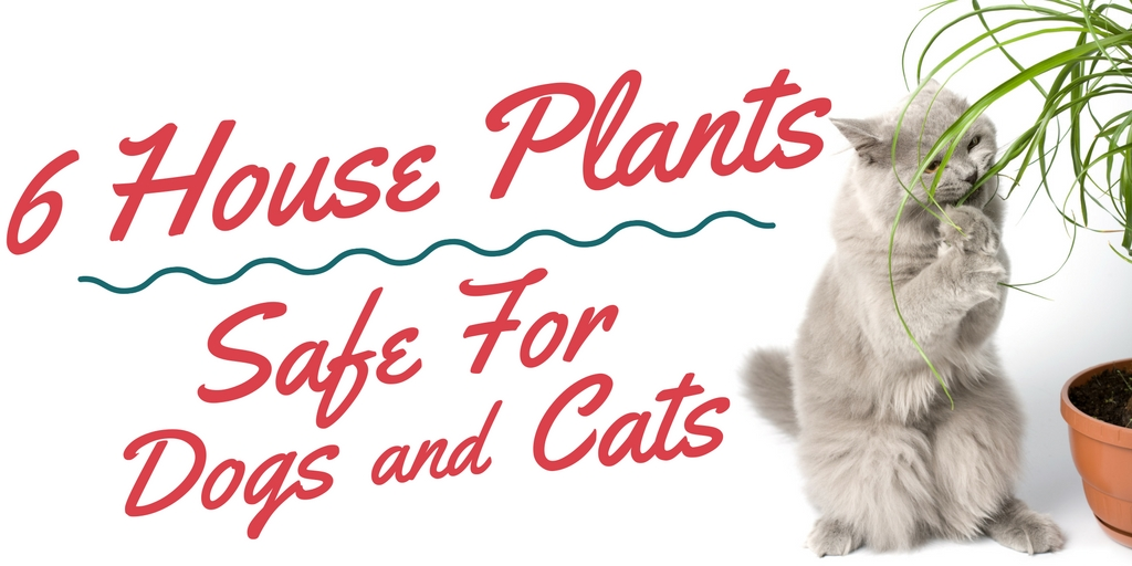 Top 6 House Plants Safe For Cats And Dogs Enchanted