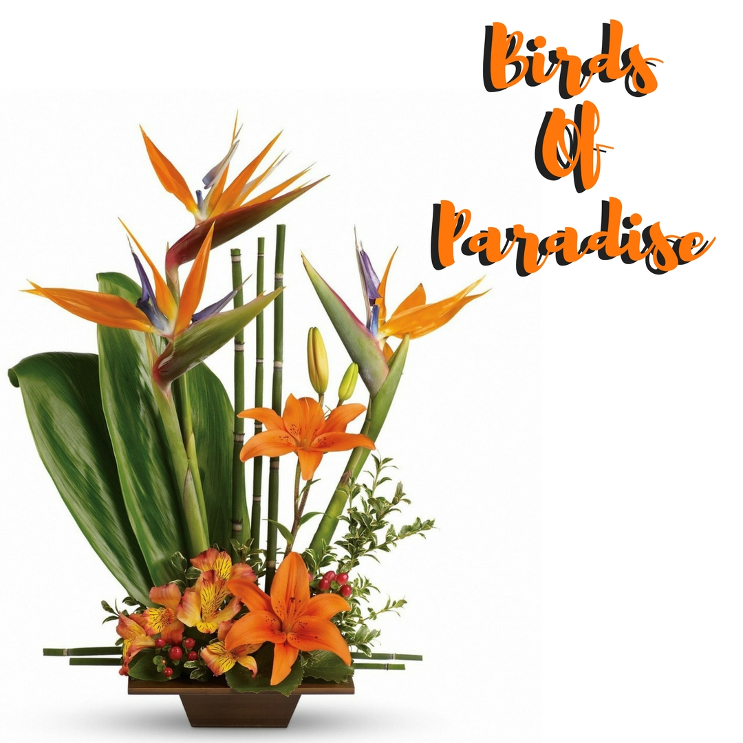tropical flower arrangements birds of paradise bouquet houston 1