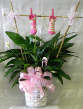 New Baby Girl Gift Plant with Clothes Line of baby socks. An exclusive plant bouquet by Enchanted Florist Pasadena TX for new baby girl gifts. Same day delivery to all local Houston area hospitals including Bayshore Medical Center and Womens Hospital of Texas. RM401
