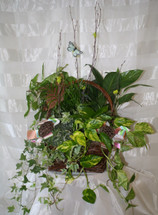 Plants Galore English Green Plant Garden by Enchanted Florist Pasadena TX - basket of all green plants perfect for a plant lover. Daily delivery available in Houston TX, Channelview TX and surrounding areas RM436