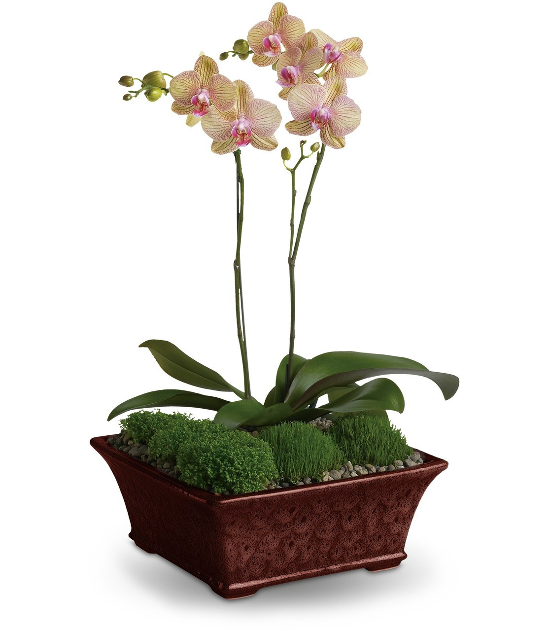 orchid plants for delivery by the best florist in pasadena tx