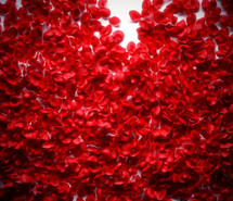 Rose Petals for Valentines Day by Enchanted Florist Pasadena TX.  Create a romantic setting for Valentines Day with all red rose petals or mixed colored rose petals. RM910