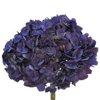 Hydrangea Elite Purple x30