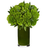 Dianthus Green 10 stems