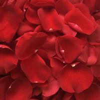 Rose Petals (3000 petals)