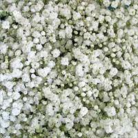 Baby Breath x 10 Bunches