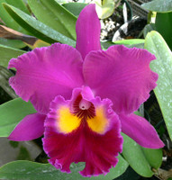 Blc. Ann Williams.