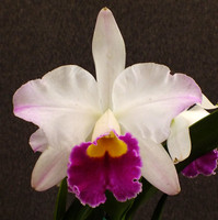 Blc. Sherry Cauley.
