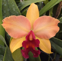 Blc. Hsinying Williette '#9'.