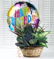 Birthday Dish Garden with Balloon