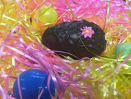Chocolate Egg 4oz