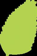 Palm Leaf SVG Cut File