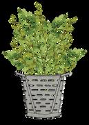 Plant SVG Cut File