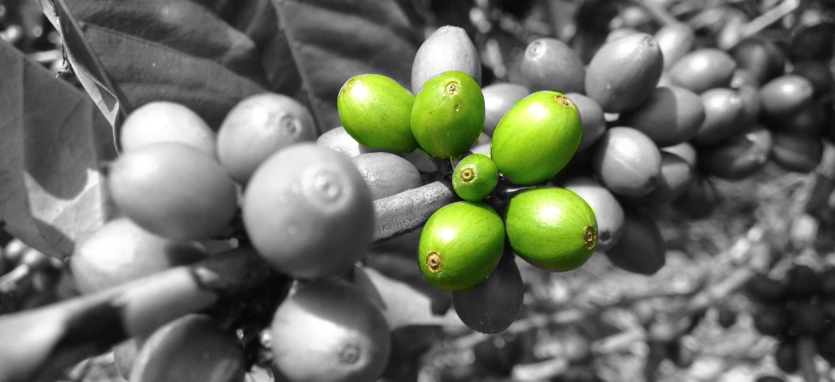 Buy Coffee Online View Our Gallery