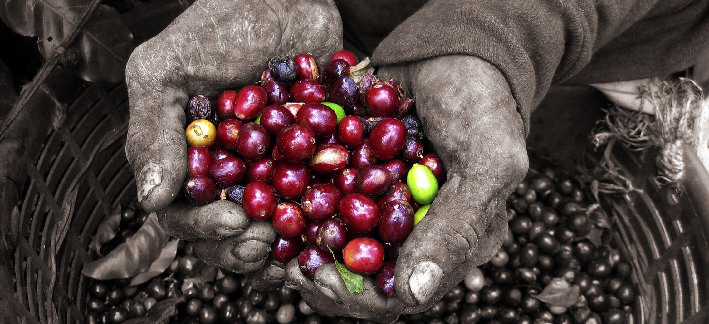 Free Shipping Buy Coffee Online Artisan Coffee Micro Roasted