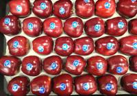 Fancy Red Apple Tray Large - 6KG