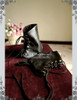 Steel Rose, Elegant Gothic Aristocrat Dandy Steampunk Fake Leather Short Spats for Man*2colors