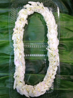 Pikky Miss World Orchid Lei