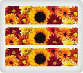 Fall Flowers ~ Edible Icing Image Border Strips