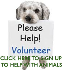 Sign Up for Animals