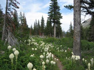 Bear Grass Flower Essence